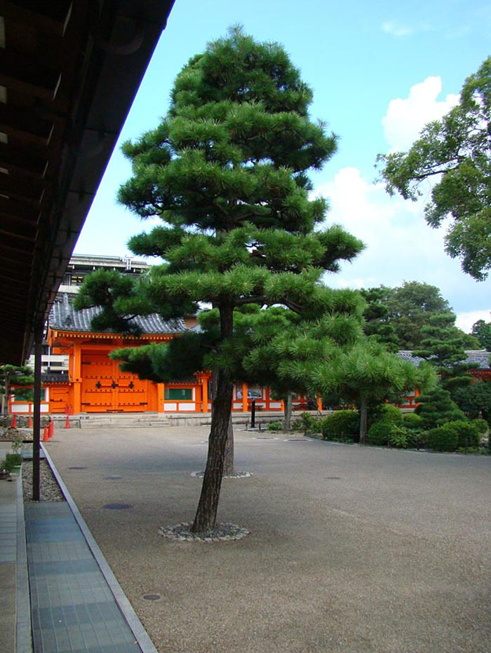 35 Beautiful-garden-in-Sanjosangendo-temple,-home-to-many-Vedic-deities-of-the-ancient-Japan